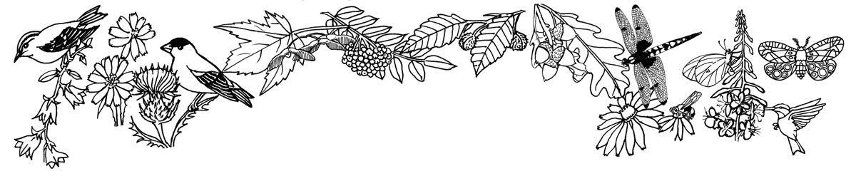 Habitats (Biomes) – Coloring Nature