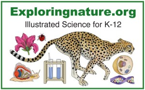 Exploring Nature Illustrated Science for kids