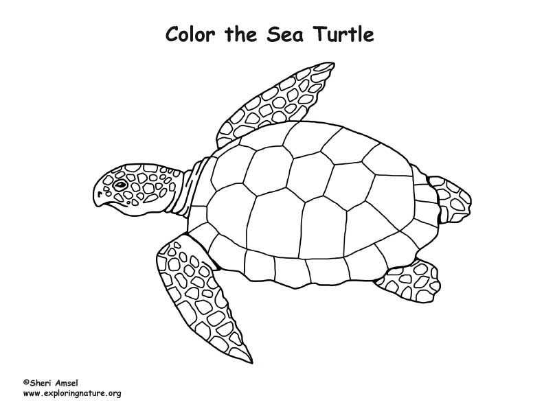 Nature Coloring Pages Pdf : Sea turtle coloring nature