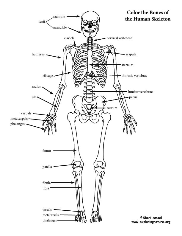 Coloring Pages For Human Body
