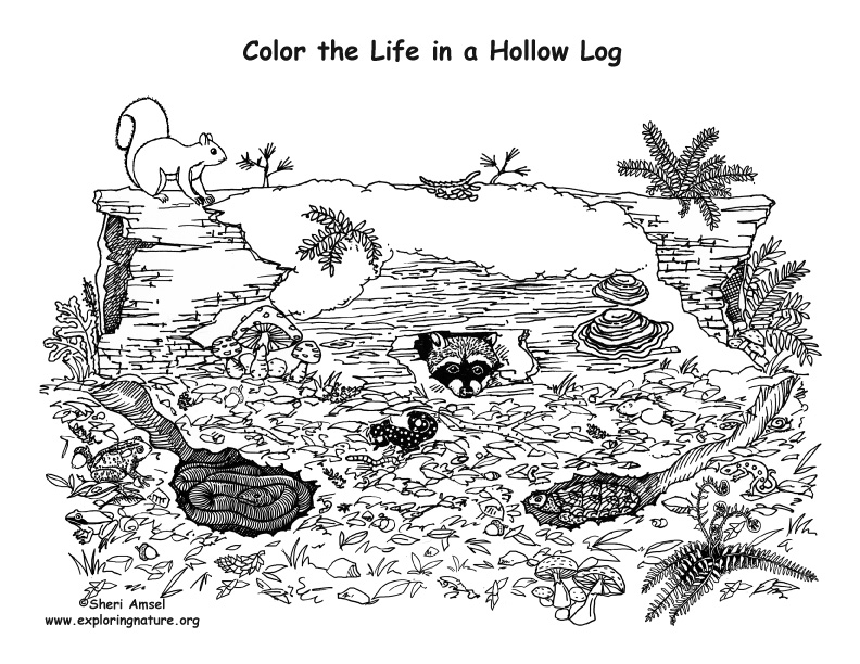 Coloring Pages Of Wetland Animals : Animals living in a hollow log coloring nature