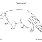 Mammals Coloring Nature