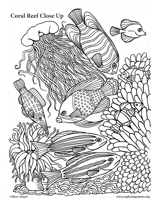 Nature Coloring Pages Pdf : Coral reef close up coloring nature