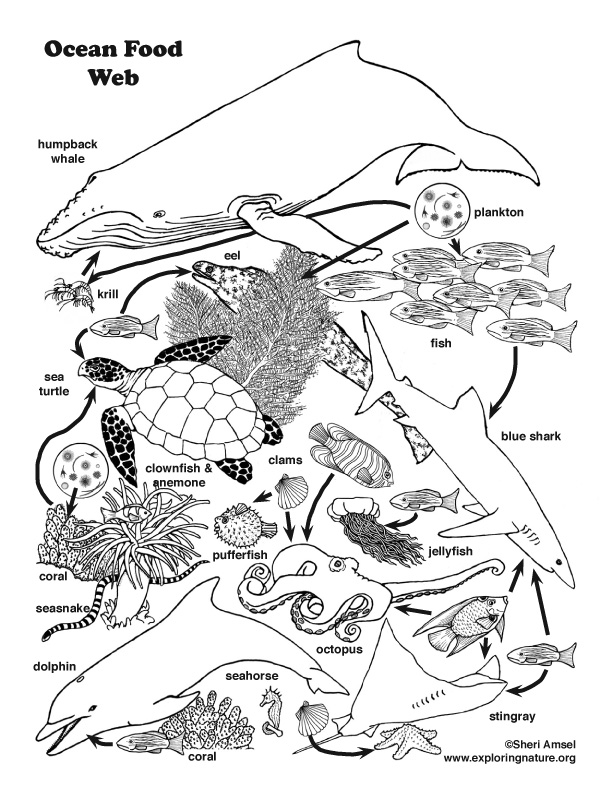 Nature Coloring Pages Pdf : Ocean food web coloring nature