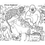African Rainforest and Wildlife (Labeled)