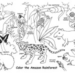 Amazon Rainforest and Wildlife (Labeled)