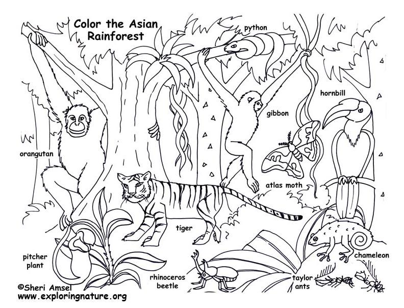Habitats Biomes  Coloring Nature