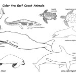 Gulf Coast Animals