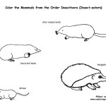 Moles, Shrews & Hedgehogs (Order Insectivores)