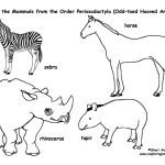 Zebras, Horses, Rhinos, Tapirs (Odd-toed Hooved Mammals)