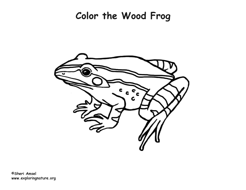 wood frog coloring pages - photo#1