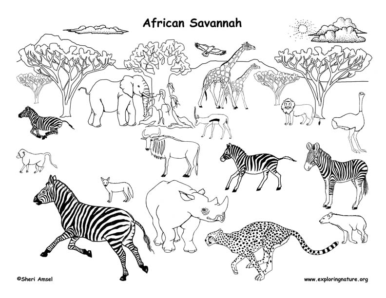 Line Drawings Of African Animals : African grassland animals labeled coloring nature