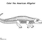 Alligator (American)