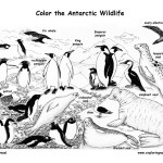 Antarctic Animals (Labeled)
