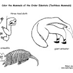 Sloths, Anteaters & Armadillo (Toothless Mammals)