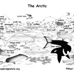 Arctic Animals (Labeled)