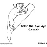 Aye Aye (Lemur)