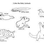 Baby Animals (More)