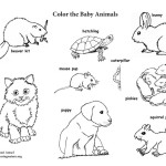 Baby Animals (Labeled)