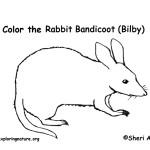 Bandicoot (Bilby)