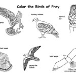 Animals groups coloring nature for Birds of prey coloring pages
