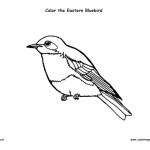 Bluebird (Eastern)