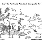 Chesapeake Bay Animals