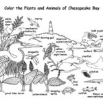 Chesapeake Bay Animals (Labeled)