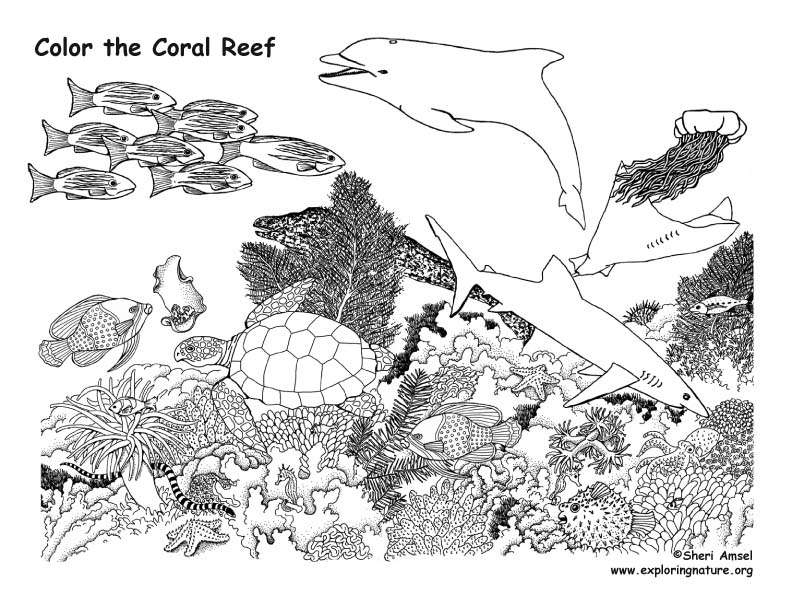 crowid: Coral Reef Coloring Page | 612x792