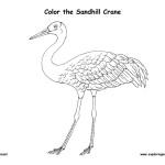 Crane (Sandhill)