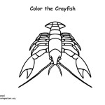 Crayfish Coloring