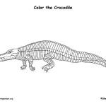 Crocodile (American)