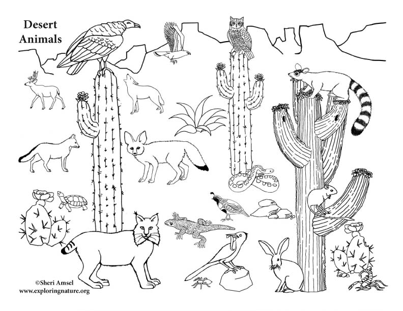 desert animals coloring pages American Desert Animals (More) – Coloring Nature desert animals coloring pages
