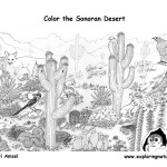 Sonoran Desert (Detailed)