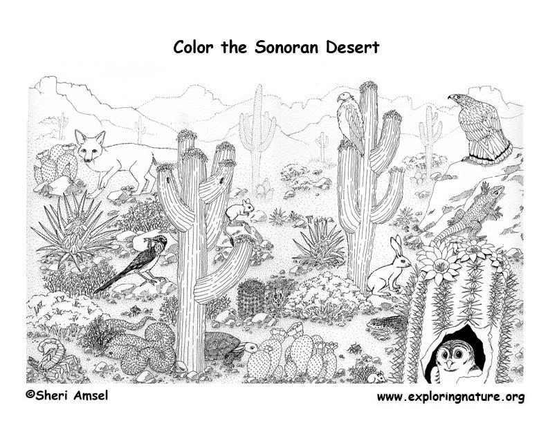 Sonoran Desert Detailed Coloring Nature