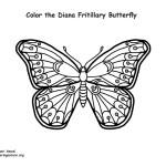 Butterfly (Diana Fritillary)
