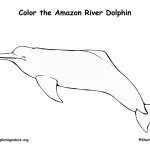 Dolphin (Amazon River)