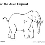 Elephant (Asian or Indian)