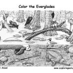 Everglades (Detailed)