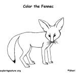 Fennec (Fox)