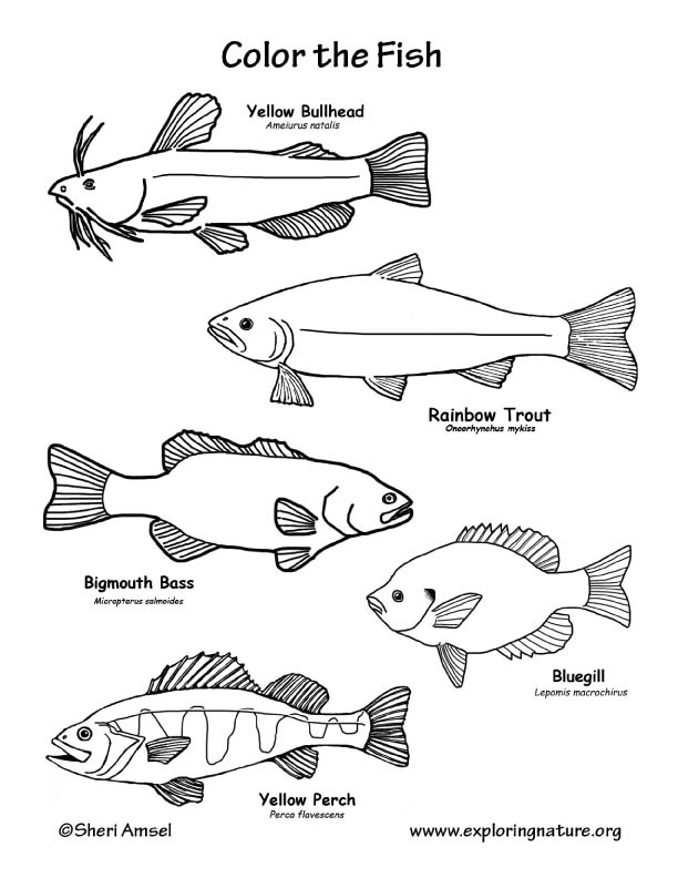 Bass Coloring Pages Printable