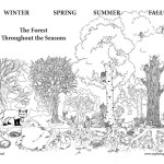 Forest Through The Seasons