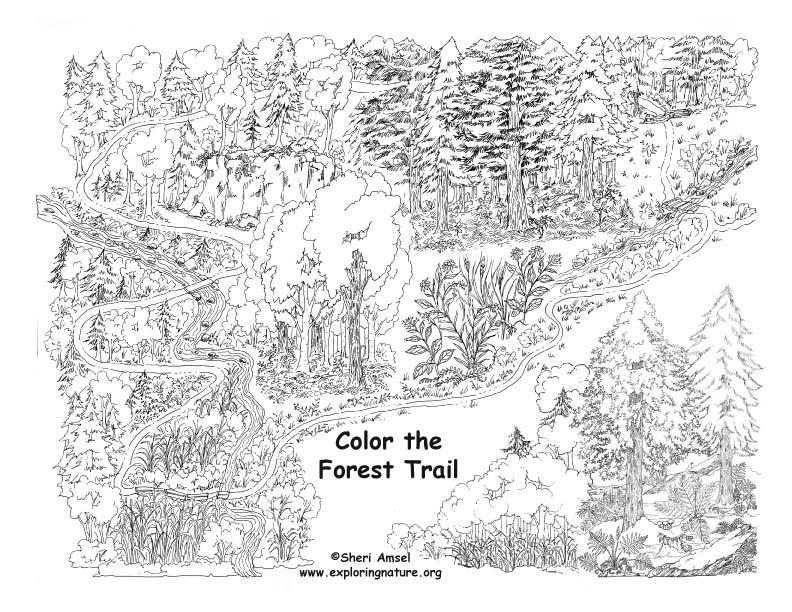 forest trail coloring nature. Black Bedroom Furniture Sets. Home Design Ideas