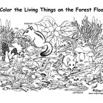 Forest Floor (Labeled)