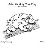 Tree Frog (Gray)