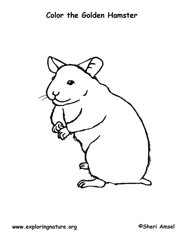 Hamster – Coloring Nature