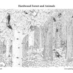 Hardwood Forest Animals
