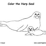 Seal (Harp)