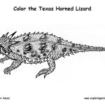 Horned Toad Lizard