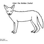 Jackal (Golden)